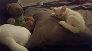 kitty cuddles